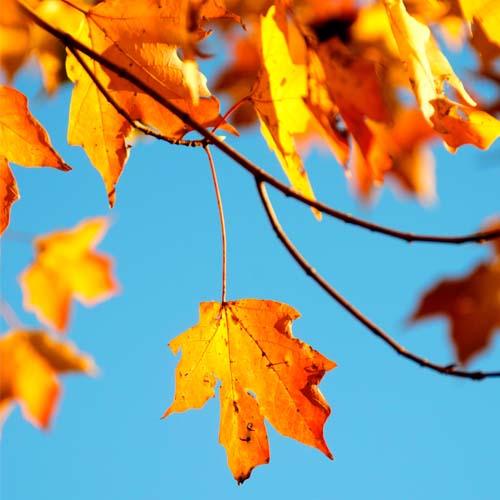 I migliori profumi da donna per l'autunno