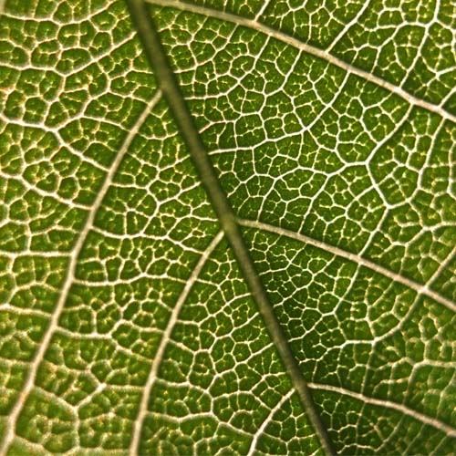 Le cellule staminali vegetali usate nei cosmetici funzionano davvero?