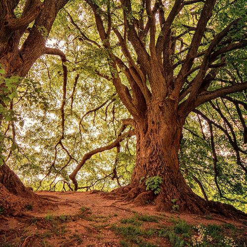 Profumi legnosi: i migliori da avere, tra classici e novità
