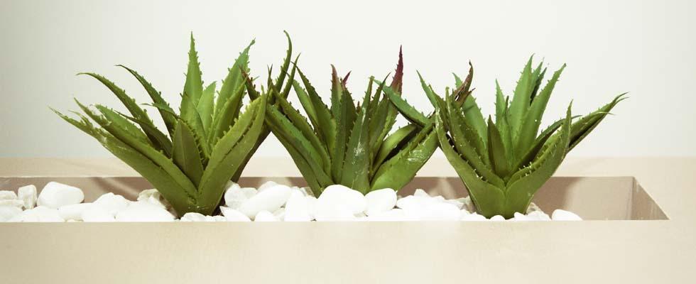 Aloe vera: a cosa serve e perché la troviamo nei cosmetici?